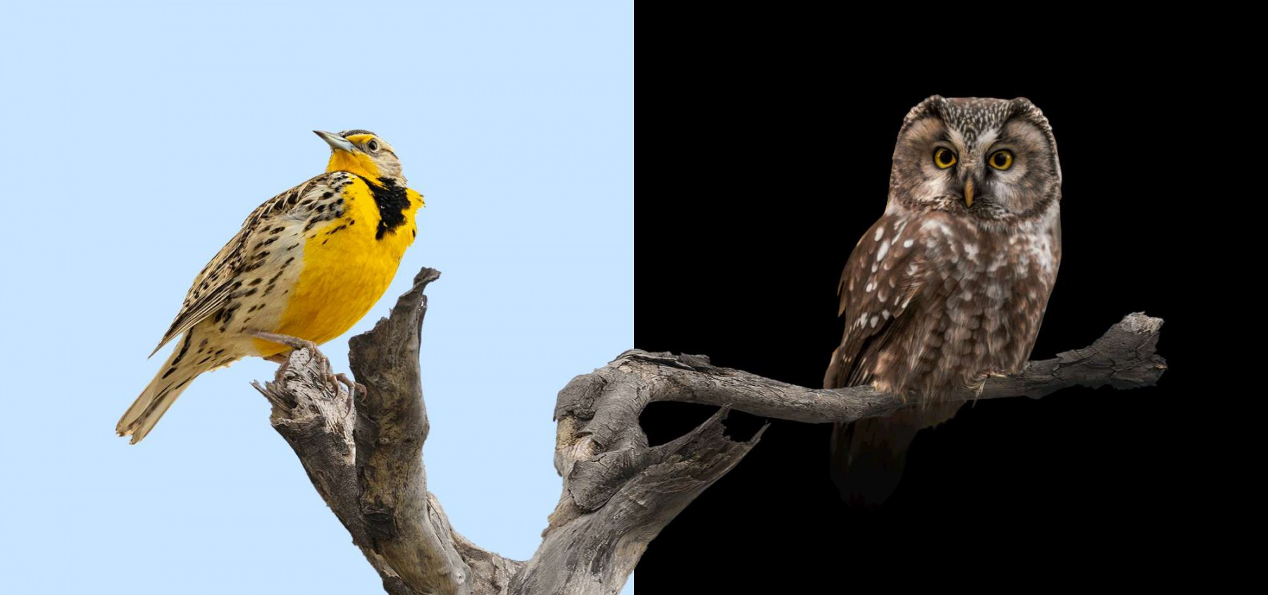 Early bird or night owl: which is the best work routine?